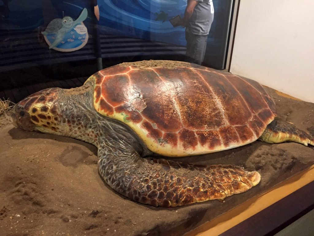 澳洲,Bundaberg,海洋生態遊,海龜生蛋. Mon Repos Conservation Park